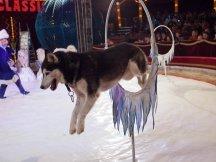 Cirkus Cirkus 2013 by ppm (89)