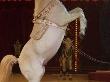 Cirkus Cirkus 2013 (183)